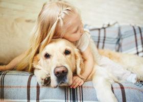 Så upptäcker du farliga knölar hos din hund