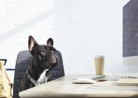 Kontorshund