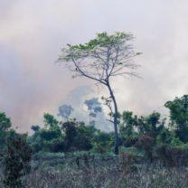 brazilian-amazon-burning-burning-picture-id516327688 (1)