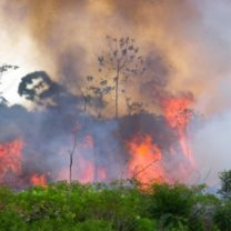 brand i amazonas regnskog