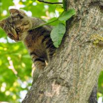 Kattunge klättrar i träd