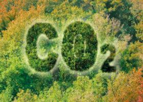 Skog fotad uppifrån med texten CO2