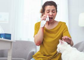 Kvinna som nyser bredvid en vit katt.