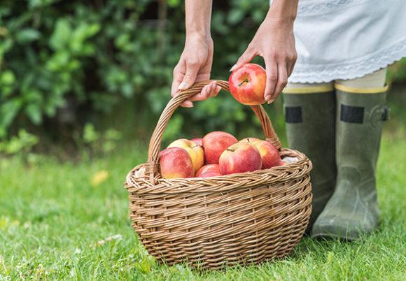 En kvinna i gummistövlar håller i en korg med äpplen på en gräsmatta