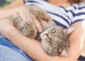 Katt ligger och blundar i famnen på en tjej