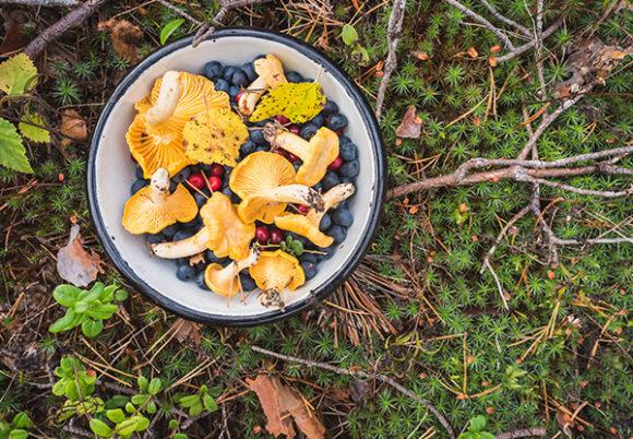 Skål med kantareller och bär på marken i skogen