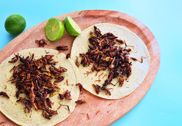 Tacobröd med insekter på mot turkos bakgrund
