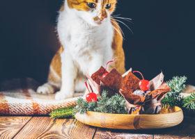 Rödvit katt tittar på chokladmuffins i granris