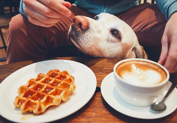 Vit hundhuvud dyker upp ovanför cafébord