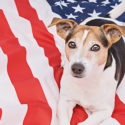 Hund ligger på amerikanska flaggan