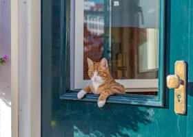 Katt hänger ut genom dörrfönster