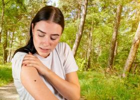 Fästing kryper på kvinnas arm