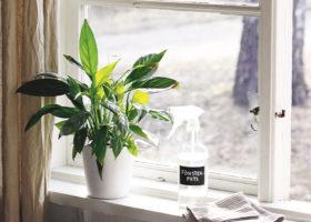 Fönster med krukväxt och fönstersprayflaska