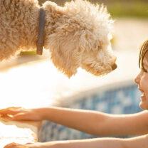 Liten flicka I pool hälsar på hund på poolkanten