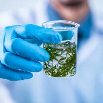 Man i labbrock håller i provrör med odlade alger