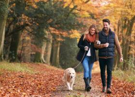 par med hund promenerar i skogen
