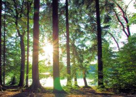 Glänta i en skog där solen tittar fram